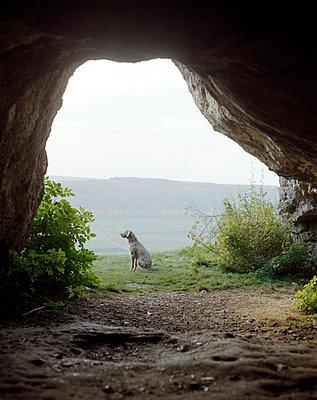 Hund sitzt vor einer Höhle - p436m1445458 von R. Petersen