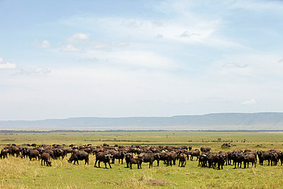 Kenya - p7190163 by Rudi Sebastian
