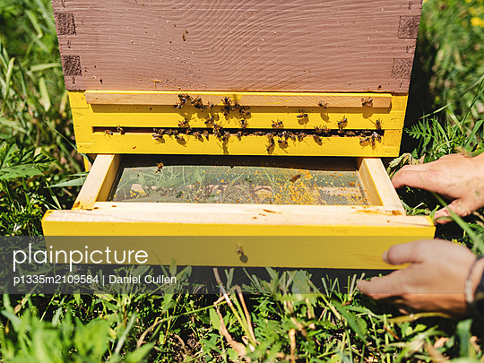 Beehives, Bees and Honey - p1335m2109584 by Daniel Cullen