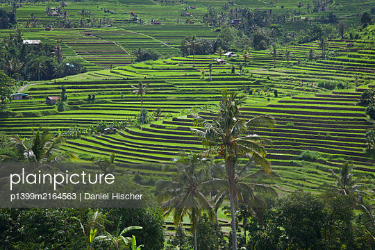 Jatiluwih Rice Terraces - p1399m2164563 by Daniel Hischer