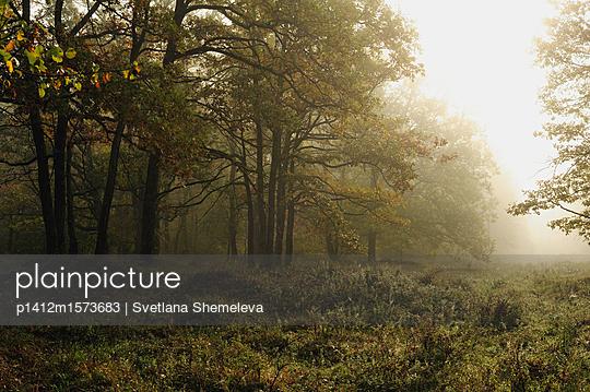p1412m1573683 von Svetlana Shemeleva