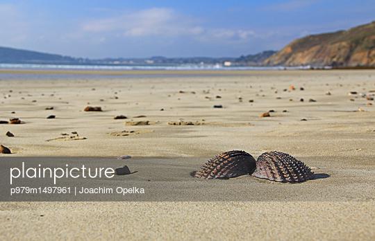Muschel am Strand - p979m1497961 von Joachim Opelka