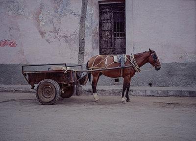 Kuba, Havanna, Pferd und Karre - p1082m2187182 von Daniel Allan