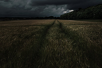 Gathering Storm, Tracks in The Field - p1166m2205730 by Cavan Images