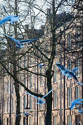 Seagulls - p226m1516529 by Sven Görlich