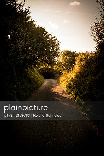 Deserted country road between trees at twilight - p179m2179763 by Roland Schneider