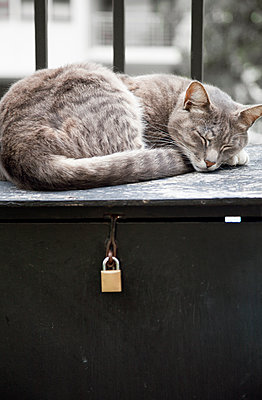 Cat Asleep on Postbox  - p1248m1503208 by miguel sobreira