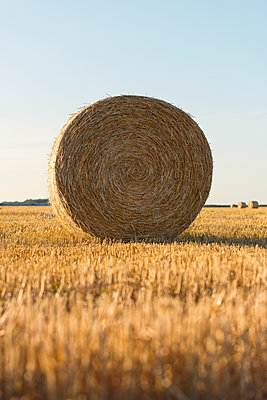 Round Hay Bale - p1335m1176668 by Daniel Cullen