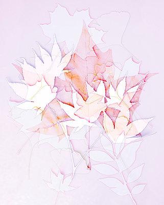 Blättercollage - p4150630 von Tanja Luther