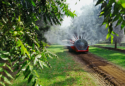 Agriculture - Chemical application, fan jet sprayer in a pecan orchard / Tulare County, California, USA. - p442m961310 by Dave Thurber