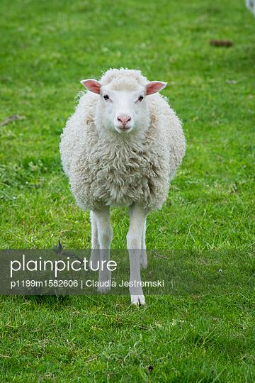Lamm - p1199m1582606 von Claudia Jestremski