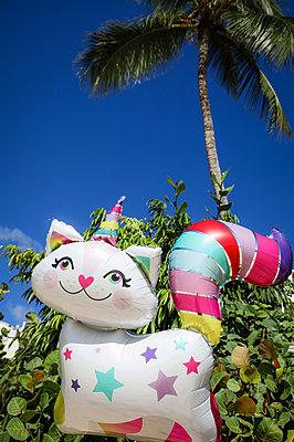Katzen-Ballon vor Palme - p045m2298102 von Jasmin Sander