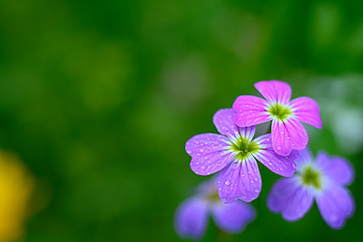 Flowers - p427m2206377 by Ralf Mohr
