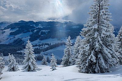 Germany, Bavaria, Chiemgau, Chiemgau Alps, Sachrang, Spitzstein in winter - p300m2080324 by Hans Mitterer