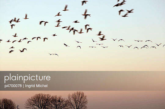 Zugvögel - p4700078 von Ingrid Michel