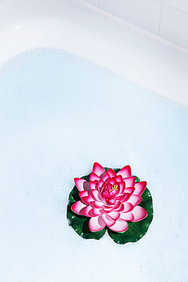 Water lily in the shower - p1149m1474884 by Yvonne Röder