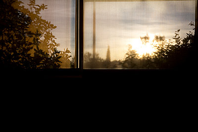 Tree through a window - p1430m1503606 by Charlotte Bresson