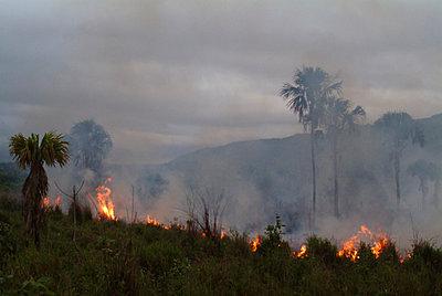 Feuer in den Tropen - p0670464d von Thomas Grimm