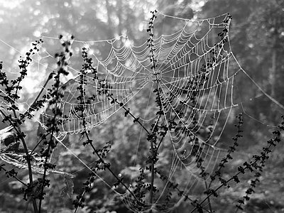 Spider's web with dewdrops - p945m2219894 by aurelia frey