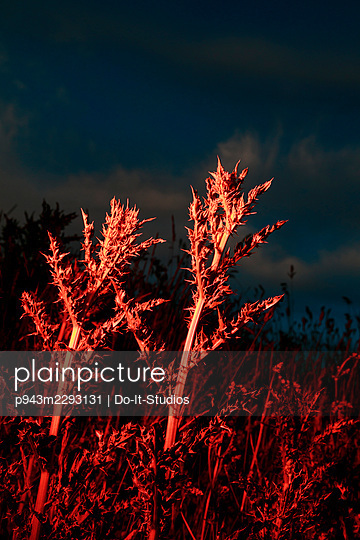 Red plants - p943m2293131 by Do-It-Studios