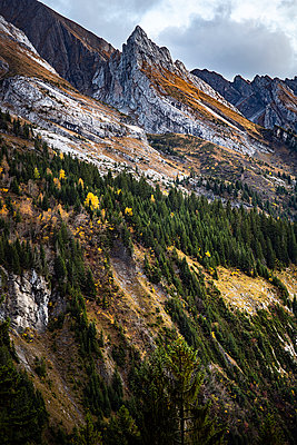 Mountain range and mountain forest, French Alps - p1007m2216472 by Tilby Vattard