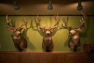 Deer heads line a wall of a restaurant - p1166m2129634 by Cavan Images