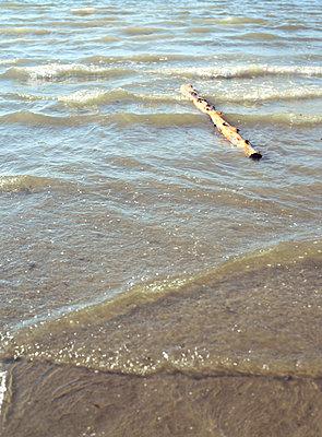 Driftwood - p3390067 by Sabine Schründer