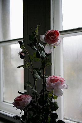 A bouquet of roses next to a window - p30110962f by Andreas Schlegel