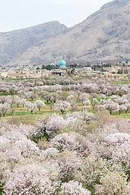 Orchard near mountains, Estahban, Iran,  - p555m1304866 by Jeremy Woodhouse