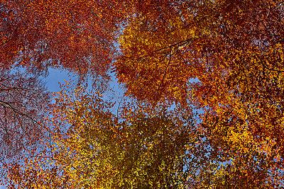 Herbst - p587m1466530 von Spitta + Hellwig