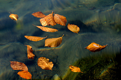 Dead leaves on water - p8130118 by B.Jaubert