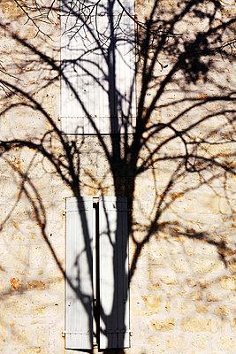 Tree Shadow - p977m891813 by Sandrine Pic