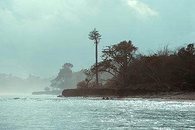 Seascape - p1166m2137118 by Cavan Images