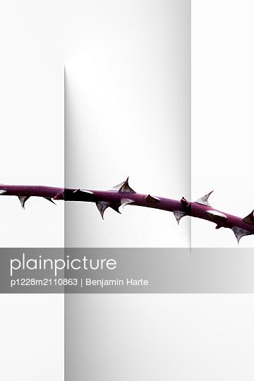 Cut paper and rose stem - p1228m2110863 by Benjamin Harte