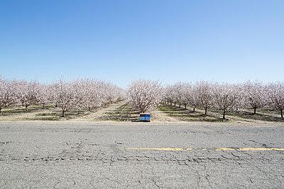Almond farming - p1134m1440760 by Pia Grimbühler