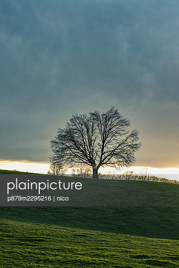 Single tree at dusk - p879m2295216 by nico