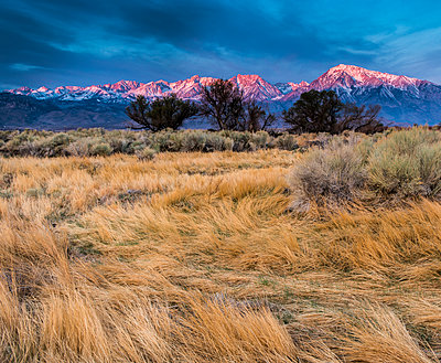 Sunrise on Mount Tom and Basin Mountain - p343m1130291f by Josh Miller Photography