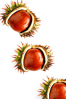 Three chestnuts  - p450m1066460 by Hanka Steidle
