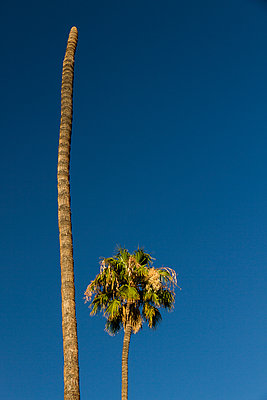 Palm and palm trunk without crown - p758m1154873 by L. Ajtay