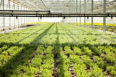 Greenhouse - p902m1031571 by Mölleken