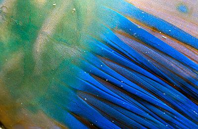 Papageienfisch Flosse - parrotfi - p3003501f by Gerald Nowak