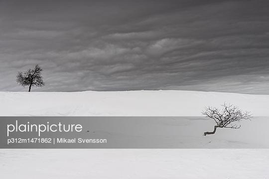 p312m1471862 von Mikael Svensson