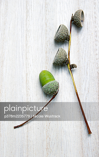 Still life of acorn seed - p378m2235779 by Nicole Wustrack