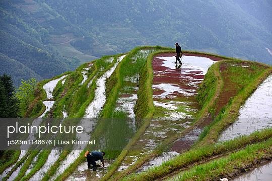 Guangxi, Reisfelder - p523m1148676 von Lisa Kimmell