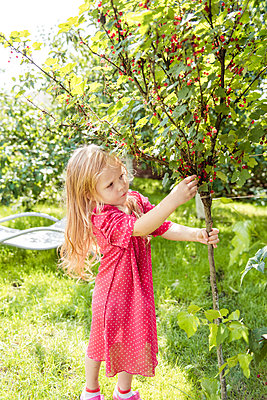 A girl in a pink dress picking red currants - p1166m2157121 by Cavan Images