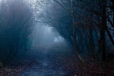 Muddy path in foggy landscape - p388m701315 by Bill Davies