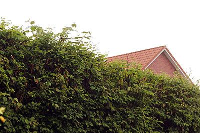 Kein Blick zum Nachbarn - p1650431 von Andrea Schoenrock
