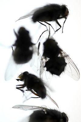 Tote Fliegen - p4010609 von Frank Baquet