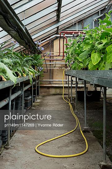 Im Gewächshaus - p1149m1147269 von Yvonne Röder