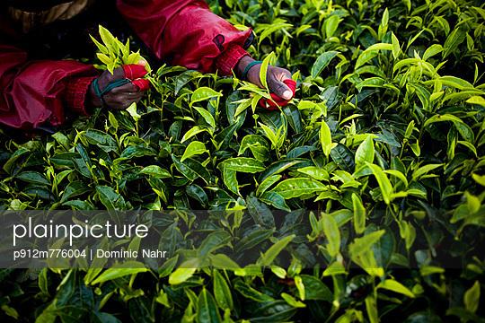 p912m776004 von Dominic Nahr